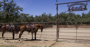 Tommy Thompson Cowhorses
