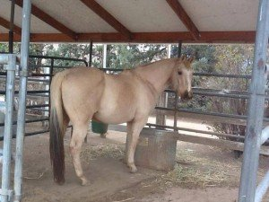 Horse Rescue Bakersfield