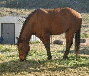 Horse Rescue Bakersfield