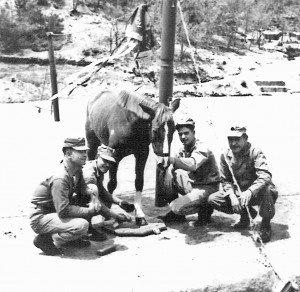 Reckless Korean War Horse Marine Hero