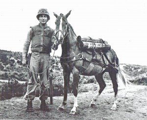Reckless Korean War Horse Marine Hero