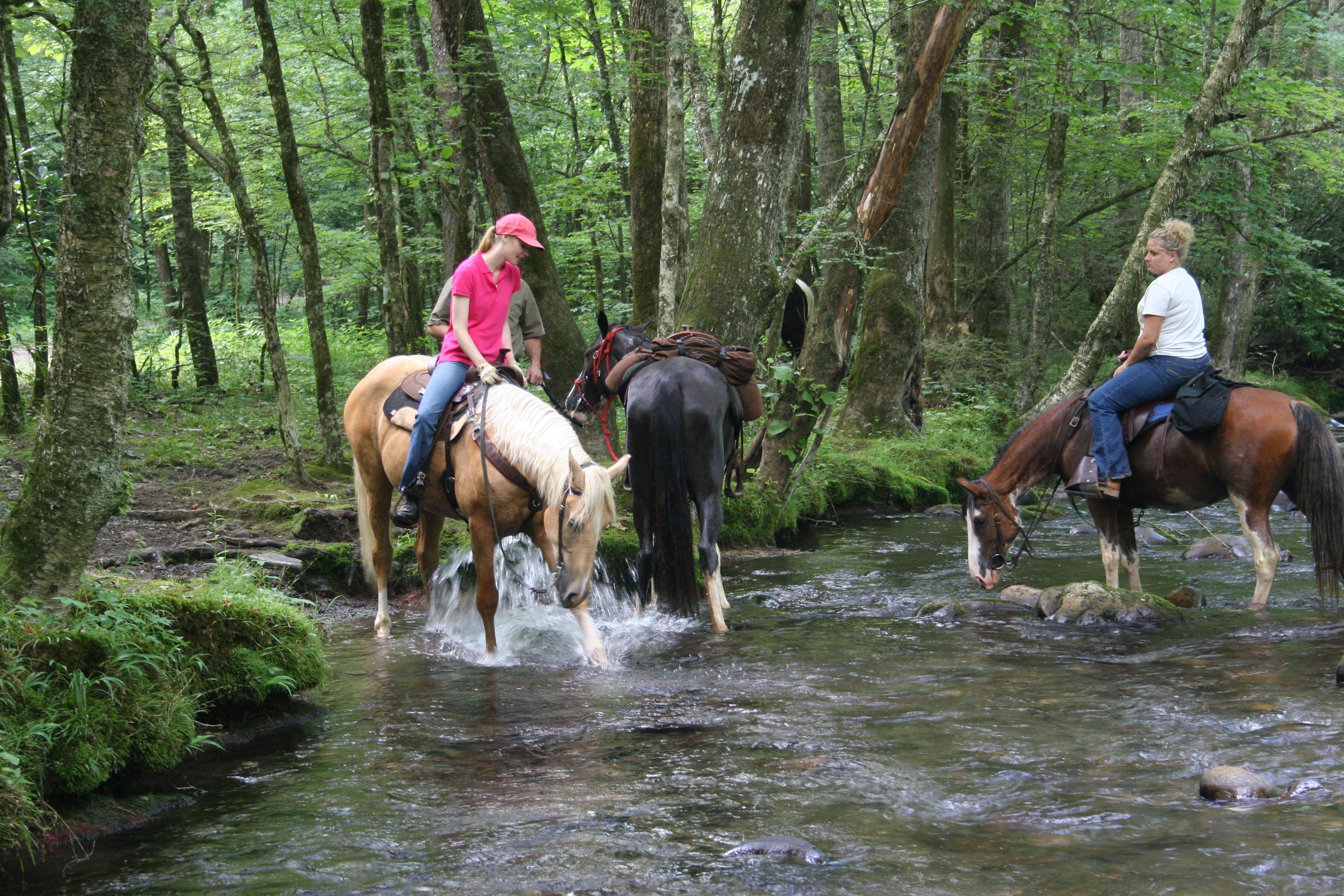 Equitrekking TV Series Explores on Horseback - Expert