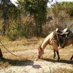 Andy Johnson Horsemanship
