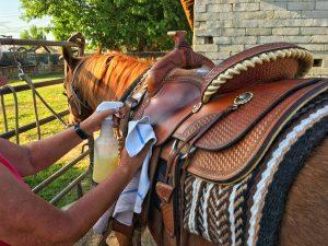 multitask horse
