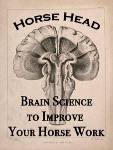 horse head dot info