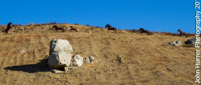 Wild Horses Norco Horse Affair
