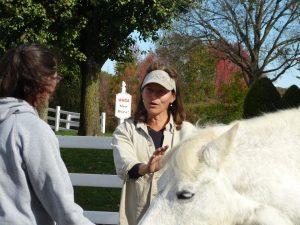 relationship based horsemanship