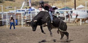working cowboy